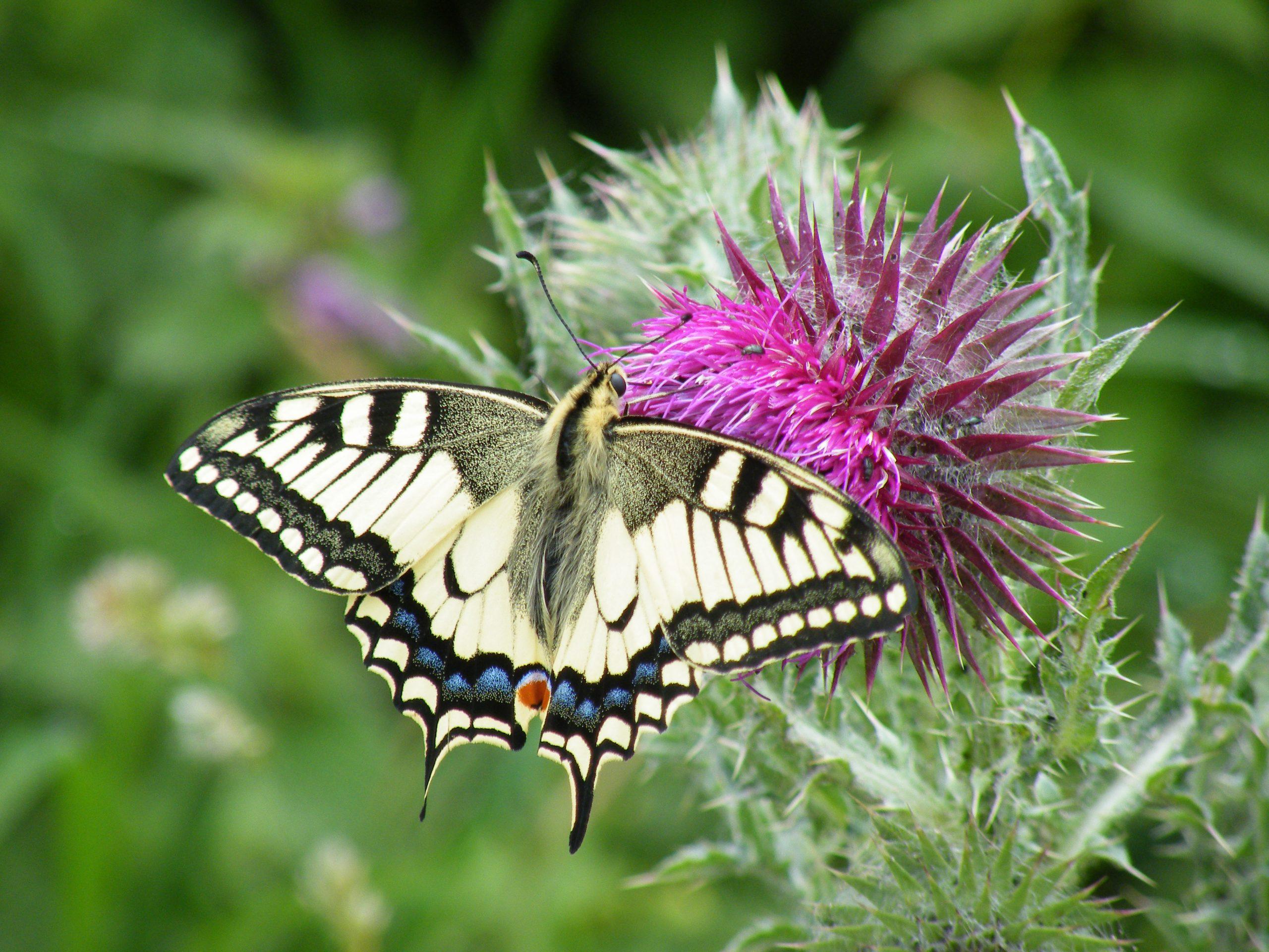 Insekten retten – Artenschwund stoppen – Volksinitiative Artenvielfalt NRW.