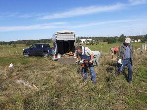 Rinder pflegen Wiesen-Lebensräume  –  Naturschutz durch Weidevieh!