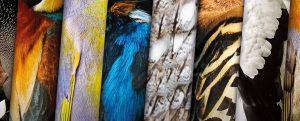 Vogel des Jahres wählen