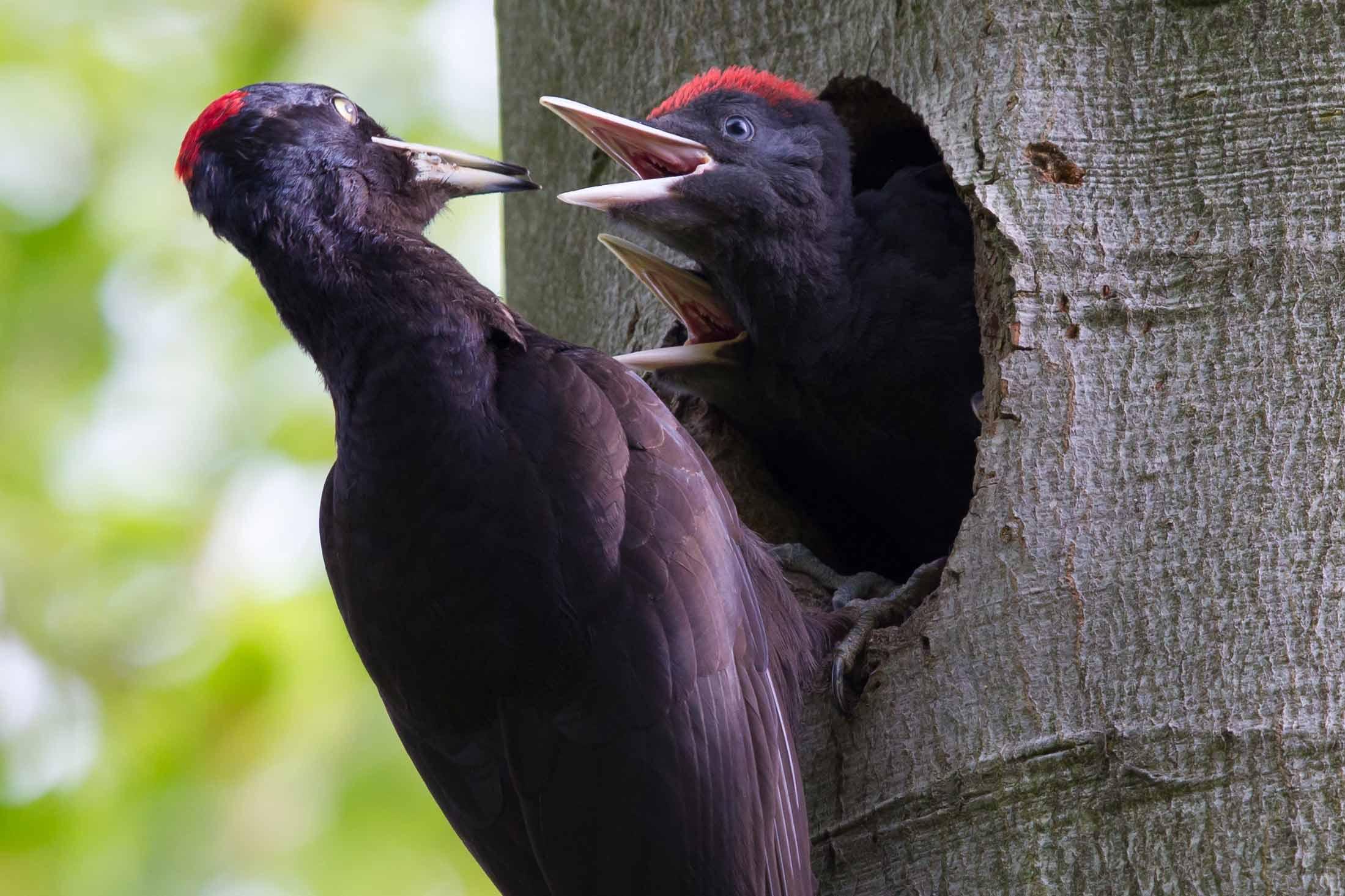Das Europäische Vogelschutzgebiet Diemel- und Hoppecketal – eine Chance für unsere Region!